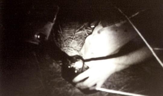 archivefilms1.jpg